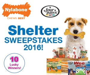 Enter the Nylabone and Four Paws Shelter Sweepstakes